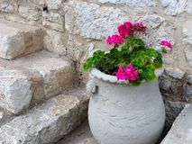 Pink Flowers in Urn Royalty Free Stock Photography