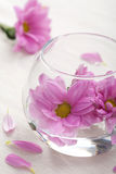 Pink flowers in vase Stock Image
