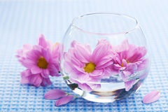 Pink flowers in vase Royalty Free Stock Image