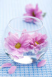 Pink flowers in vase royalty free stock images