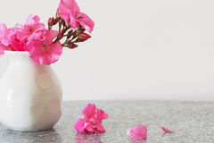 Pink flowers in  vase Stock Images