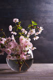 Pink flowers in vase on gray wooden background. Springtime blooming. Flower bouquet Royalty Free Stock Image