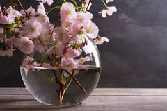 Pink flowers in vase on gray wooden background. Springtime blooming. Flower bouquet. Royalty Free Stock Photo