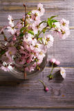 Pink flowers in vase on gray wooden background. Springtime blooming. Flower bouquet. Royalty Free Stock Images