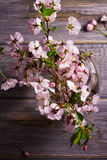 Pink flowers in vase on gray wooden background. Springtime blooming. Flower bouquet. Royalty Free Stock Photography