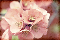 Pink flowers on vintage background Royalty Free Stock Photography