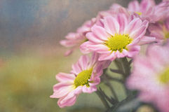 Pink flowers with a vintage texture Royalty Free Stock Photography