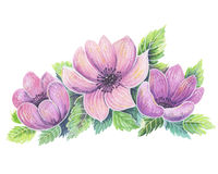 Pink Flowers. Pink Watercolor Flowers with leaves on white background Stock Illustration