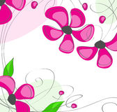 Pink flowers on a white background royalty free stock photography