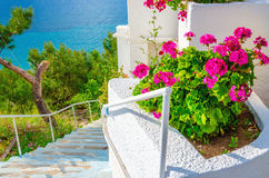 Pink flowers with white stairs by sea in Greece Stock Photo