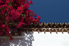 Pink flowers on a white wall with tiles and blue sky Stock Photo