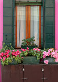 Pink flowers on the windowsill Stock Image