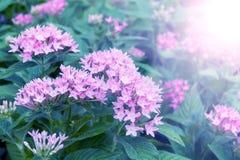 Pink flowers in winter morning season Stock Photo