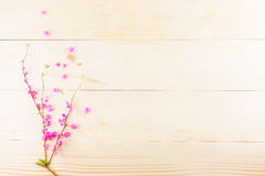 Pink flowers on wooden. Beautiful pink flowers on wooden background or backdrop Stock Photography