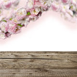 Pink flowers  and wooden boards Stock Photography