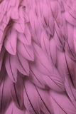 Pink fluffy feather closeup Royalty Free Stock Photography