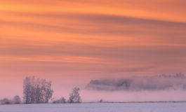 Pink fog in winter morning Royalty Free Stock Photography