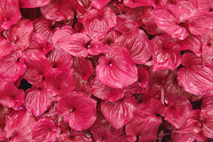 Pink Foliage Stock Images