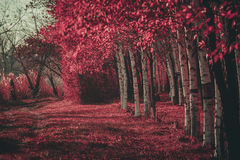 Pink forest stock photos