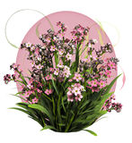 Pink Forget Me Not Royalty Free Stock Images