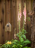 Pink Foxglove and Birdhouse Royalty Free Stock Image