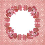 Pink frame with geranium flowers Royalty Free Stock Photography