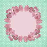 Pink frame with geranium flowers Stock Images