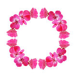 Pink frame with geranium flowers Stock Photo