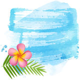 Pink frangipani banner Stock Images