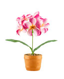 Pink frangipani flower ( Artificial flowers made from cloth) in Stock Photography
