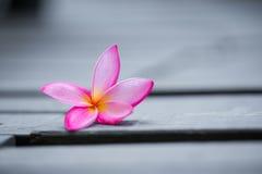 Free Pink Frangipani Flower On Grey Wooden Royalty Free Stock Image - 71367756