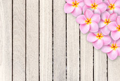 Free Pink Frangipani Flower On Grey Wooden Plank Background Stock Photography - 55391392