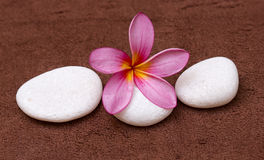Pink frangipani. With spa concept Royalty Free Stock Photo