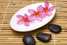 Pink frangipani. With spa concept Royalty Free Stock Image