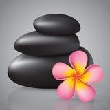Pink frangipani Stock Photos