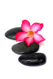 Pink Frangipani With Zen Stone Stock Photo