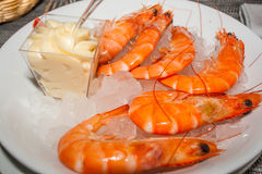 Pink fresh prawns with mayonnaise and ice. Royalty Free Stock Photo
