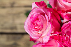 Pink fresh roses on wood Stock Photography