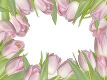 Pink fresh spring flowers background. EPS 10 royalty free illustration