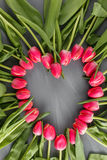 Pink Fresh Spring Tulips Botanical Art Floral Background. heart Frame Wreath Flowers Concept Woman`s day Greeting Card Stock Photos