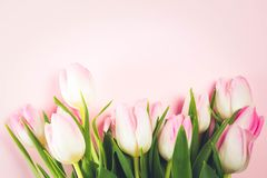 Pink fresh tulips Royalty Free Stock Image