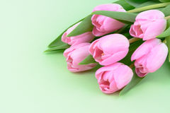 Pink fresh tulips flowers. Background Royalty Free Stock Image