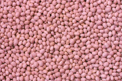 Pink frijoles. A lot of pink beans royalty free stock photography