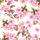 Pink fruit apple, cherry, sakura flowers. Seamless floral template. Aquarelle on white background Stock Photos