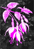 Pink fuchsia on dark background Royalty Free Stock Photography
