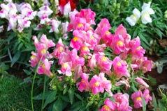 Pink garden royalty free stock image