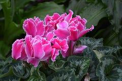 Pink Garden Bouquet Stock Images