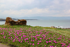 Pink garden by the sea. Coastline landsacape with pink flowers, the ocean and a cloudy sky Stock Images