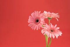 Pink Gebera flower bouquet stock photos