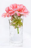 Pink Geranium in Crackled Vase Stock Photography